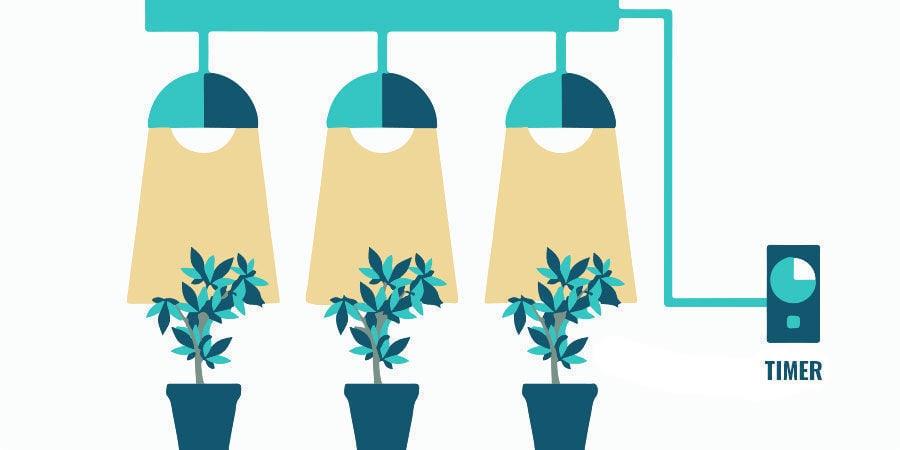 Probleme Während Cannabis Blüht: Passe Deine Beleuchtung an