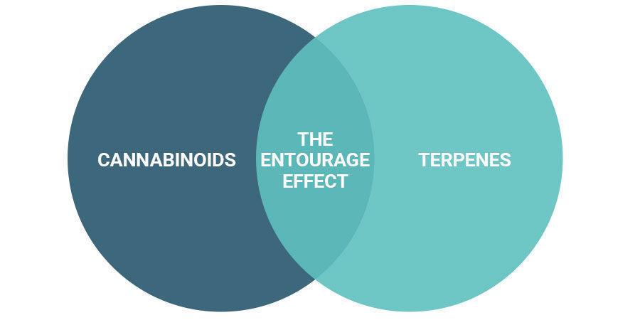 Macht der Entourage-Effekt high?