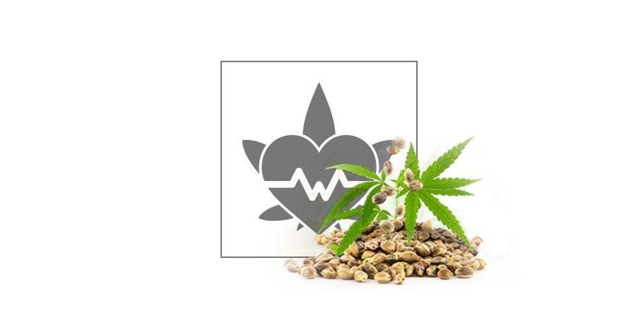 Top 10 CBD-Cannabissamen