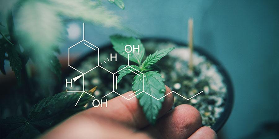 Erfahre Mehr Über Cannabinoide