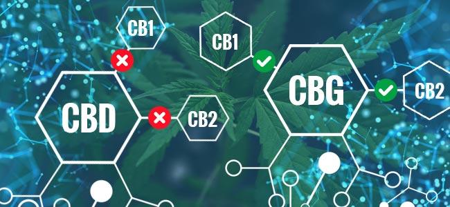 Was Sind Die Unterschiede Zwischen CBG Und CBD?