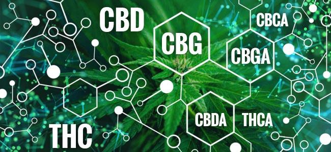 Was Ist CBG?