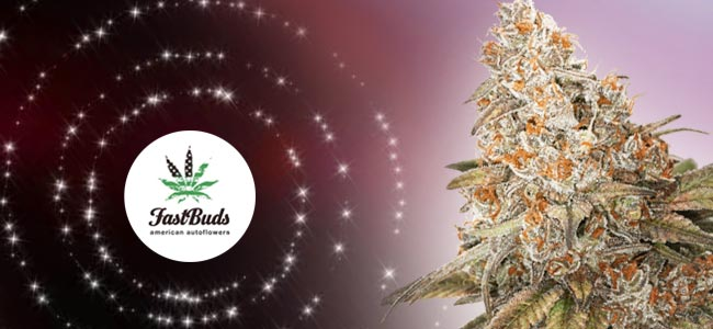Blackberry - FastBuds