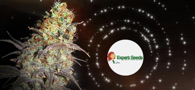 Caramella Auto - Expert Seeds