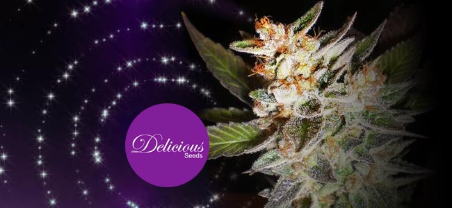 Delicious Candy Early Version - Delicious Seeds