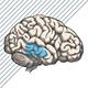 ALKOHOL UND DER HYPOTHALAMUS UND DIE HYPOPHYSE