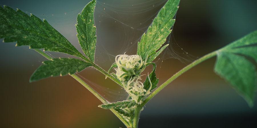 2. Wehre Krankheiten Und Schädlinge Ab