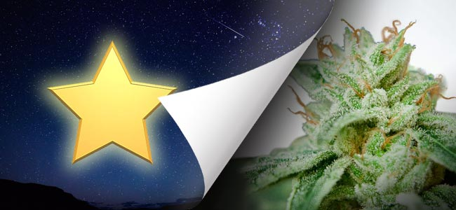 CBD Star (Ministry Of Cannabis)