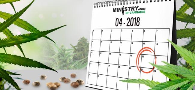 Saatgutbank Des Monats: Ministry Of Cannabis