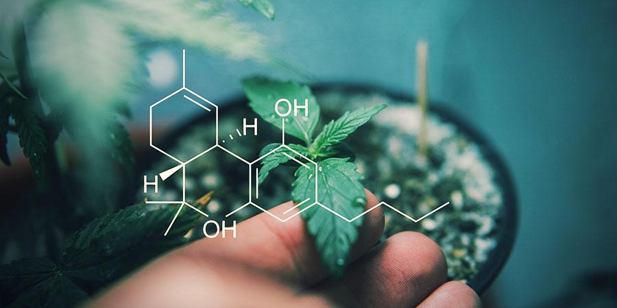 Welche Effekte Bewirken Die Verschiedenen Cannabinoide?