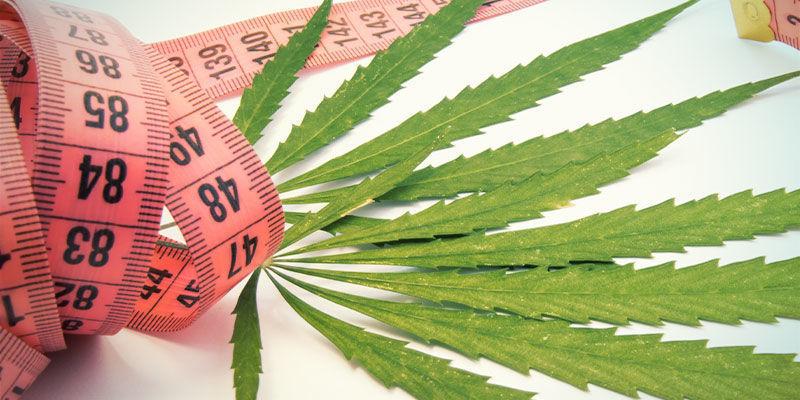 Kann Cannabis einem helfen, sein Gewicht zu reduzieren?