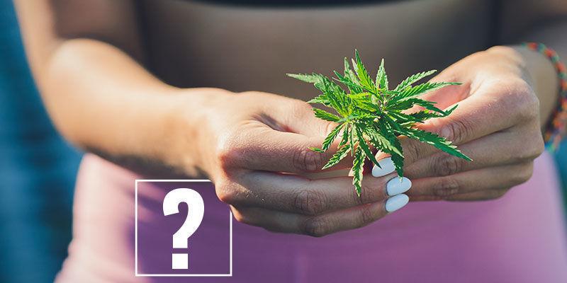 Cannabis und Gewichtsabnahme