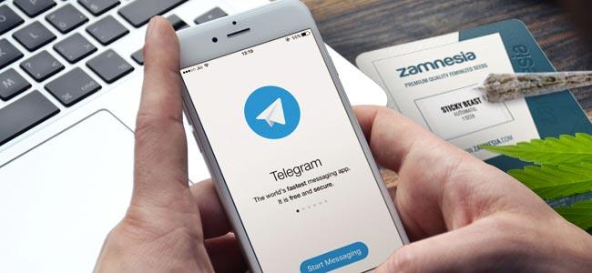 WARUM DU ZAMNESIA AUF TELEGRAM FOLGEN SOLLTEST