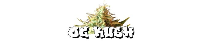 OG Kush - Zamnesia Seeds