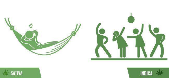 Fehler von Grasrauchern: Indica und Sativa