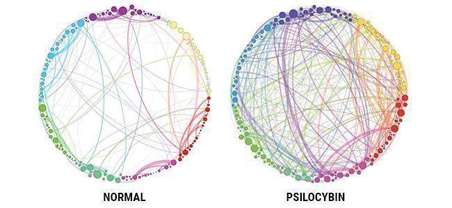 PSILOCYBIN & DAS GEHIRN