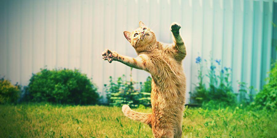 Katzen Die Es Lieben Sich Zu Berauschen - Katzenminze