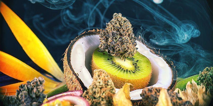Intensiv Schmeckende Cannabissorten