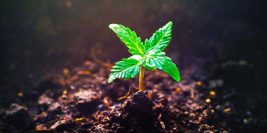 Es Gibt Noch Mehr Pflanzen