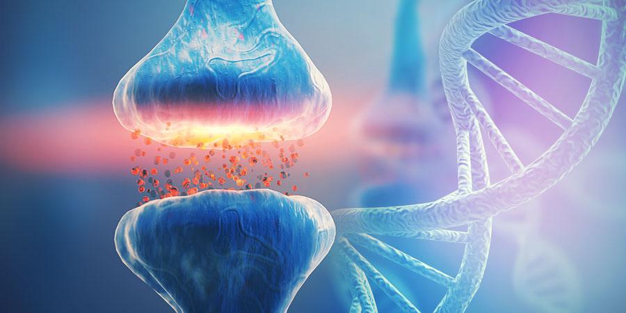 DNA UND DAS ENDOCANNABINOID-SYSTEM