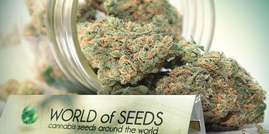 World Of Seeds - Genetiken Für Alle