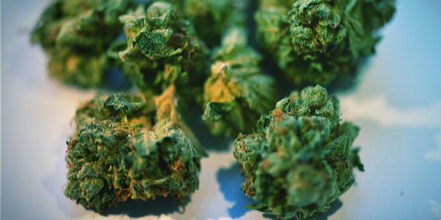 Was Passiert, Wenn Du Deine Cannabisblüten Mishandelst?
