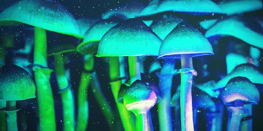 Entfernung Der Lampen Vom Zauberpilze Substrat