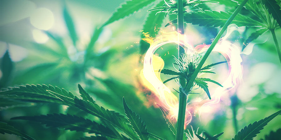 Cannabis-Zuchtraum: Ordentliche Haushaltsführung