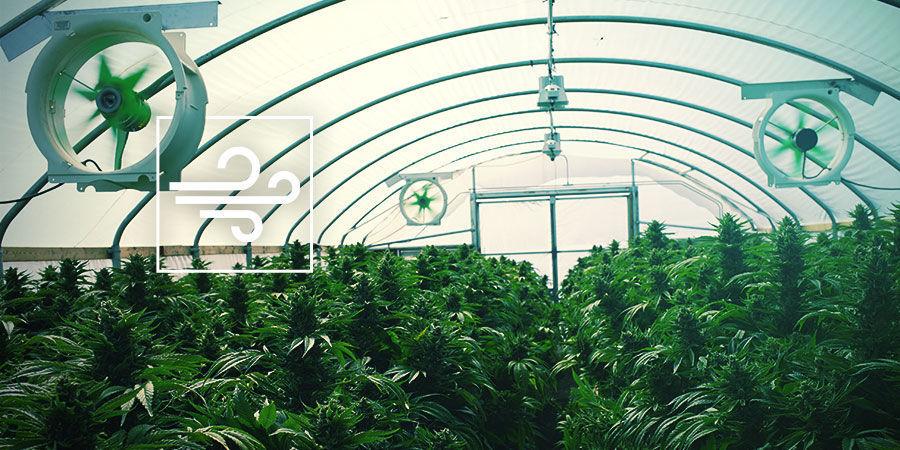 Cannabis-Zuchtraum: Belüftung