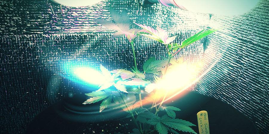 Cannabis-Zuchtraum: Ausstattung Der Wände