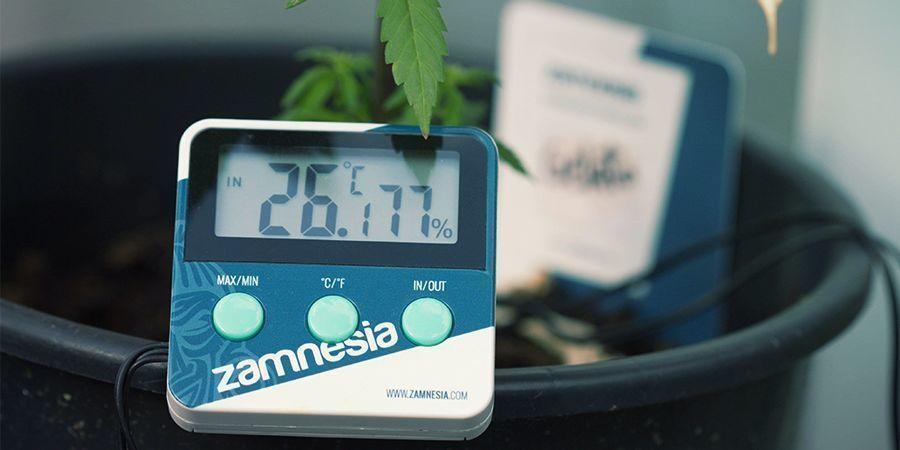 Thermometer/Hygrometer für Cannabis