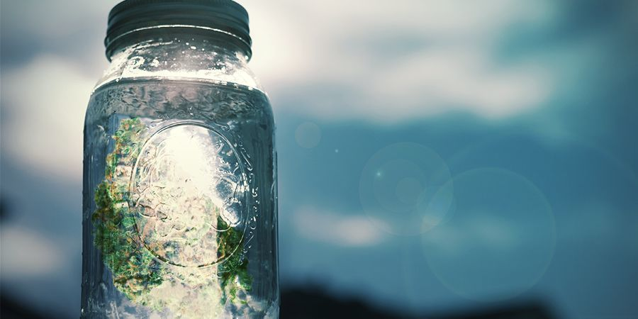 Cannabissalz: Schritt-für-Schritt-Anleitung