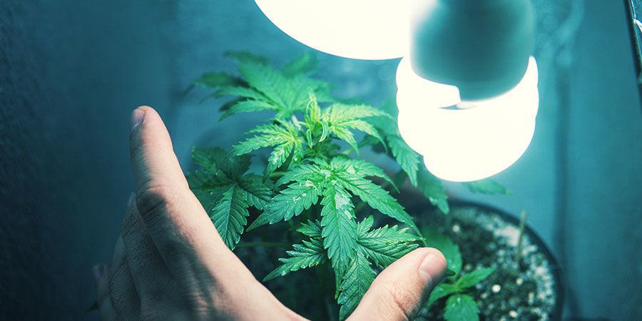 Cannabis In Einer Getarnten Growbox Anbauen