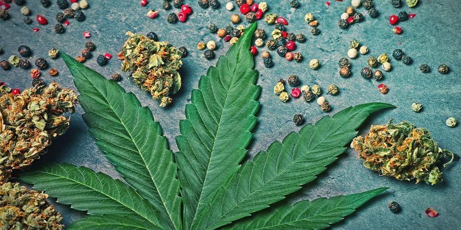 Beta-Carophyllen In Cannabis