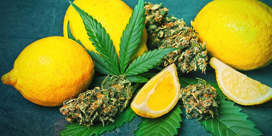 Limonen In Cannabis