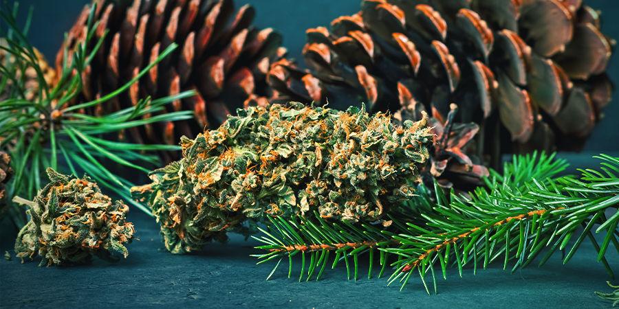 Pinen In Cannabis