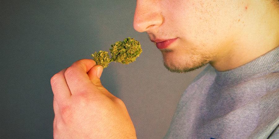 Cannabisverunreinigungen erkennen: Rieche und schmecke Dein Weed, bevor Du es anzündest