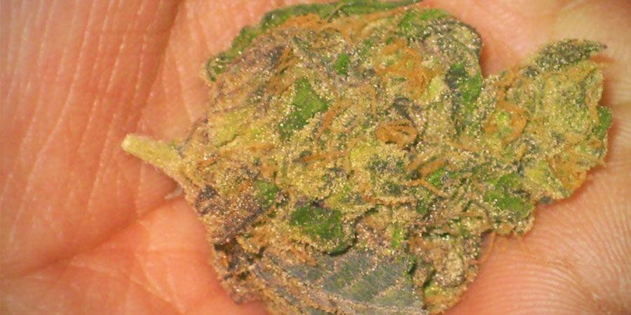 Arten von Cannabisverunreinigungen: Haarspray