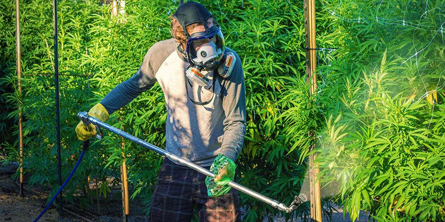 Arten von Cannabisverunreinigungen: Industrielle Pestizide oder Dünger