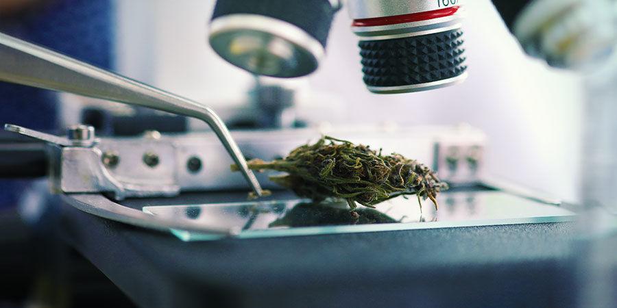 Arten von Cannabisverunreinigungen: Blei