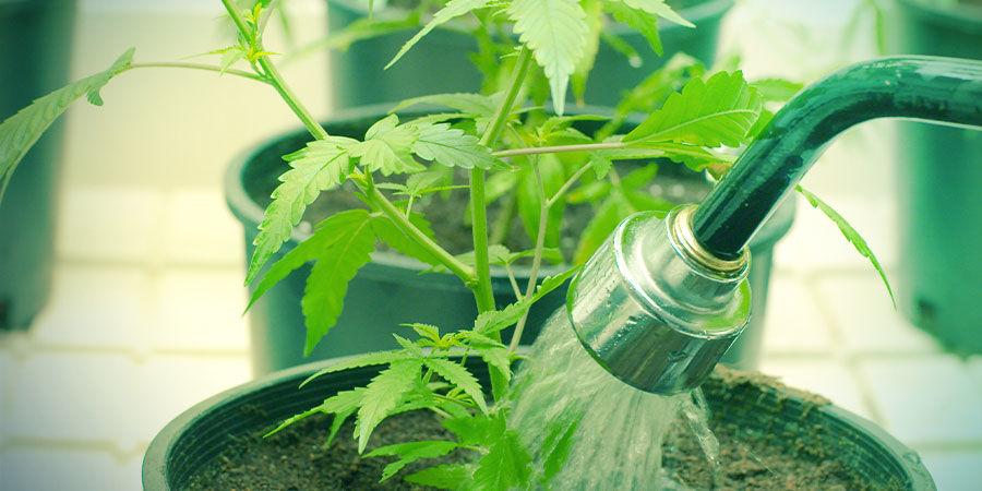 Wasser - Cannabisanbau