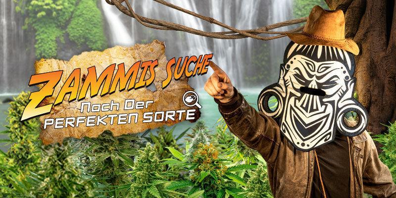 Cannabis-Seedfinder