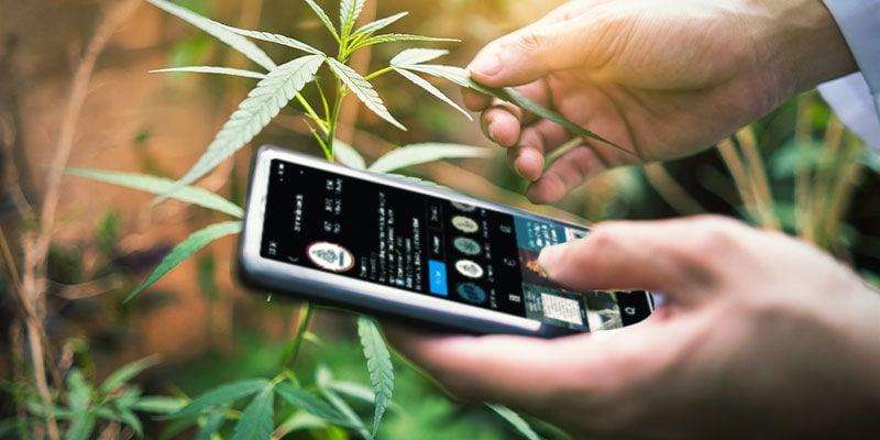 Folge Social-Media-Profilen, die Weed bewerten