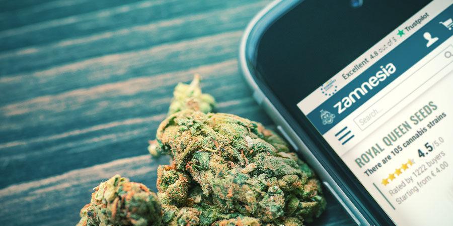 Probiere Unsere Neuen RQS-Cannabissorten Bei Zamnesia Aus!