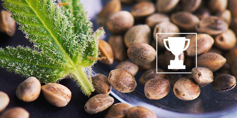 Die besten regulären Samen für Grower und Züchter