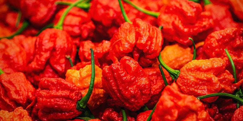 Schärfsten Chilis: Infinity Pepper