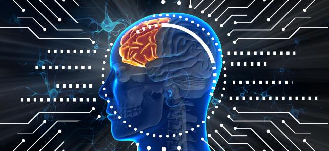 Neurogenese im adulten menschlichen Gehirn zutage