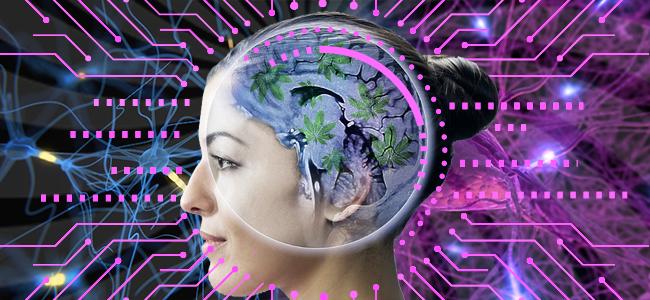 Cannabis beeinflusst tatsächlich die Neurogenese
