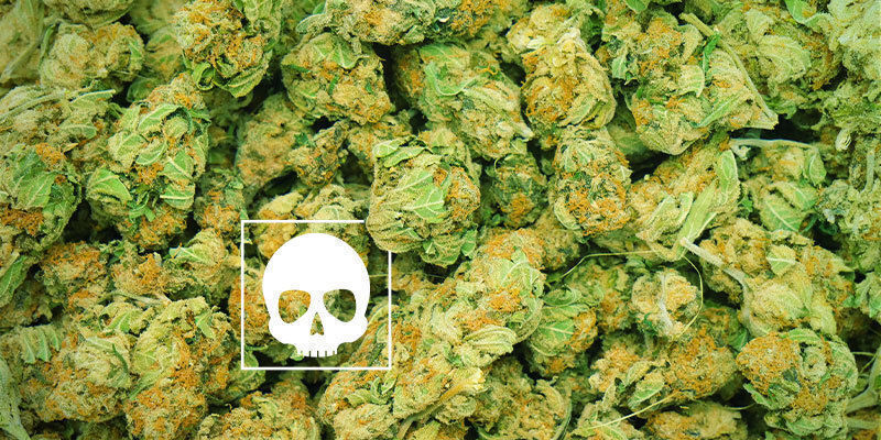 Wie viel Cannabis ist tödlich?