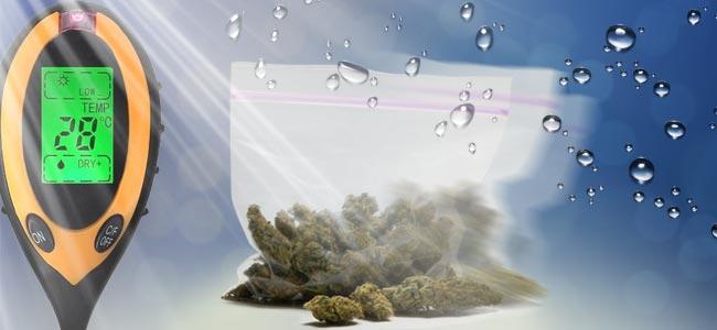 Faktoren, Die Bei Der Lagerung Berücksichtigt Werden Sollten Cannabis